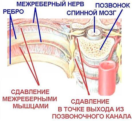 позвоночник болит и суставы